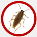Vancouver Cockroaches Icon | Phantom Pest Control