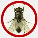 Vancouver Fly Control Vancouver | Phantom Pest Control
