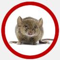 Vancouver Rodent Control Icon | Phantom Pest Control