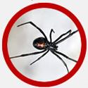 Vancouver Spider Control Icon | Phantom Pest Control