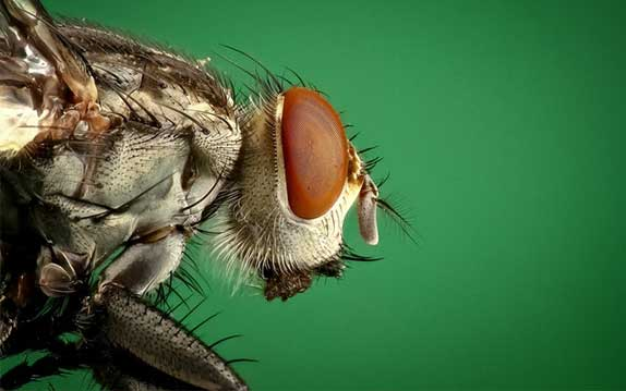 Vancouver Fly Control Services
