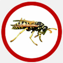 Wasp Icon Red | Phantom Pest Control Vancouver