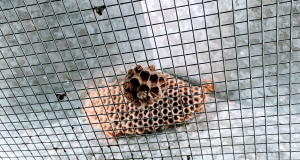 Wasp Nests in Hidden Places | Phantom Pest Control Vancouver